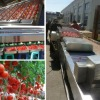 fruit and vegetable processing machine 2-3 ton per hour