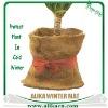 Winterschutzmatte Cocos latexierte Kokosfasern