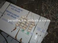 new normal white garlic 2012 in cold season