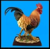 Polyresin Animal model of rooster
