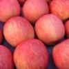 Fuji apple new crop