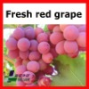 New fresh fruits seed grapes