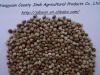 High qualtiy HEMP SEEDS,2012 new crop