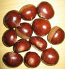 Raw Chestnut from China, for Jordan Market