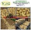 China Shandong Holland potato Japan market