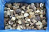 Frozen Boletus Edulis, whole, grade B, 4-6cm