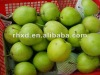 hot!!!! 2012 fresh early su pear