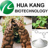 Giant Knotweed Extract 99% Resveratrol