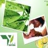 Epimedium Extract, Icariin5%-98%,high quality epimedium extract,Horny Goat Weed Extract