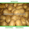 2012 fresh new crops holland potato for sale