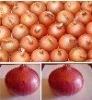 2012 new good fresh Onions