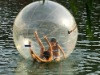 funny water ball
