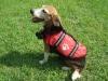 Dog Safety Life Jacket