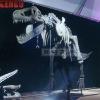 Sale skeletons t rex fiberglass skeleton