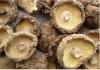 Fresh Dried Shiitake Mushroom