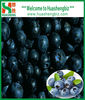 iqf frozen blueberry prices