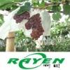 Green Food Grapes