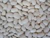 large white kidney beans