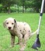 Dog Poop Scoop