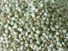 Chinese Raw Buckwheat Kernels