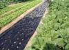 pe agricultural mulch film