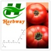 high quality Tomato Extract,1%-95% lycopene supplier,natural tomato extract powder manufacturer