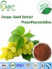 100% Natural High quality Grape Seed Extract Proanthocyanidin powder