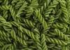 Extrusion Green pea twist snack(Green)