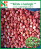 IQF Frozen Organic All Star Strawberry