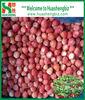 IQF Frozen Organic All Star Strawberry