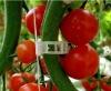 greenhouse clip