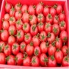 Hot sell in China of the cherry tomato