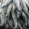 spanish mackerel fillet
