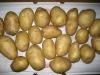 Fresh Potato supplied from Shandong,China