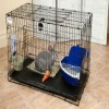 pet squirrel cages