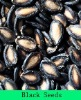 black melon seed