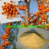 organic sea buckthorn powder