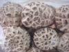 grow in raw wood of Discount Dried White Flower Mushroom