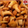 Canned Chanterelles