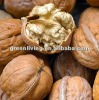 China walnuts in shell or kernel s ogood quality