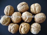 supply walnut in shell