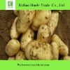 Fresh potato importers
