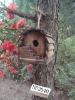 2011 new bird feeder