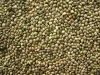 Chinese Hemp seeds for bird