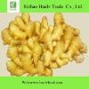 Ginger Fresh/chinese fresh mature ginger