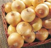 Wholesale fresh onion 2012 crop