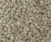 Ethiopia Wellega whitish sesame seeds