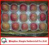 JQ Red Fuji Apple Wholesale Distributors