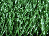 6mm-10mm cheap swimming pool artificial grass