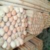 natural wood sticks/natural wood handles